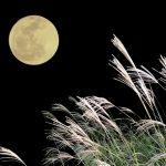 月見団子の由来は?並べ方や数、ススキの意味。お供えの仕方!