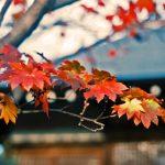 大本山東福寺【京都】の紅葉おすすめは?見頃はいつ?ポイントは?