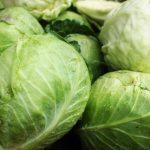 春野菜の栽培方法はや育て方は?種まきから収穫まで