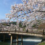 京都「嵐山」の桜は見どころがいっぱい2017年の見頃とアクセス方法
